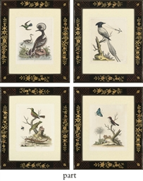 Twelve Ornithological Studies,