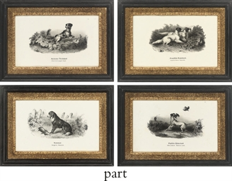 Twelve studies of sporting dog