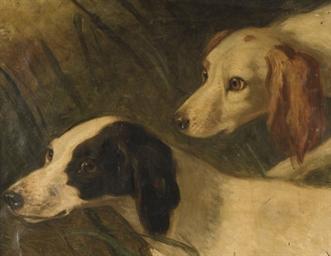 Etudes de beagles