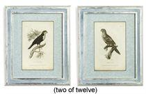 A SET OF TWELVE ENGRAVINGS OF EXOTIC BIRDS