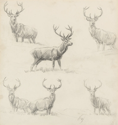 A sheet of studies of stags