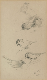 Two sheets of studies of birds