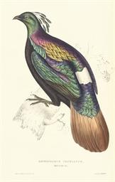 GOULD, John (1804-1881) [and Nicholas Aylward VIGORS (1787-1...