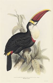 GOULD, John (1804-1881). A Monograph of the Ramphastidae, or Family of Toucans. London: for the Author, [1833-]1834[-1835].