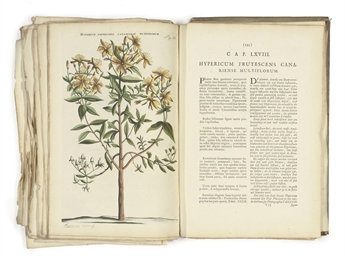 107 Botanical Studies, from Ho