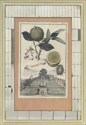 Studies of Fruit, from Nürnber