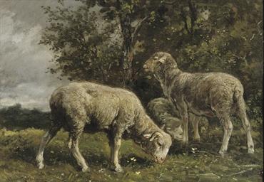 Moutons sous un arbre: sheep u