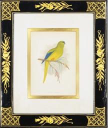 Parrots in Captivity: Twelve P