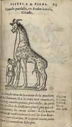 [DU PINET, Antoine (ca 1510-ca