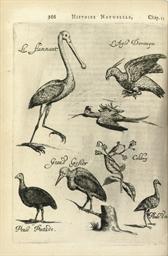 [ROCHEFORT, Charles de (1605-1