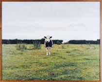 Poor Cow, 2001