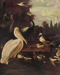 A pelican, peacocks and ducks