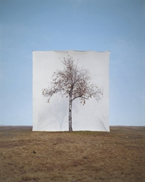 Tree #1, 2006