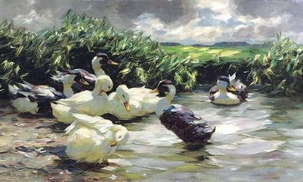 Enten in grünem Wasser: Ducks