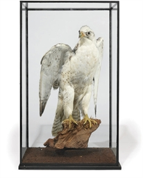 A VICTORIAN TAXIDERMY DISPLAY