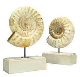 TWO MADAGASCAN AMMONITES