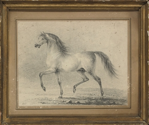 Study of an Arab horse
