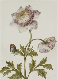 A pink anemone and a meadow br