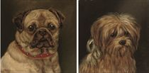 Study of a Pug; and Study of a Scottish Terrier