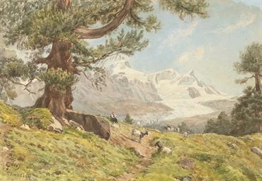 The goat herd, Findelen, Austr