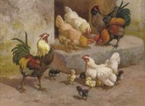Chickens, chicks and cockerels