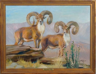Mountain Rams