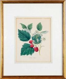 [Botanicals]: Nineteen Plates