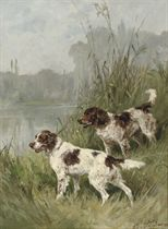 Two English Springer Spaniels on the watch