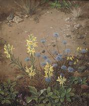 Zandflora; blossoming flowers