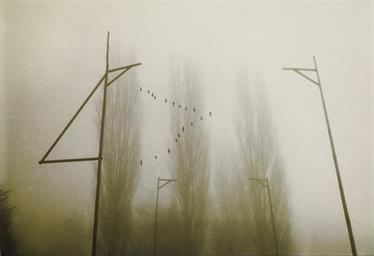 Pappeln, um 1987/88