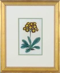 [Botanicals]: Twelve Plates