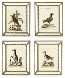 TEN HAND-COLOURED ENGRAVINGS O
