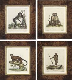 Monkey studies