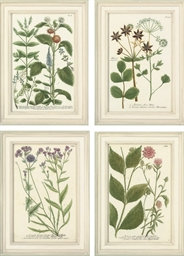 Studies of flowers, from Phyta