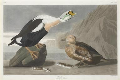 King Duck (Plate CCLXXVI) Fuli