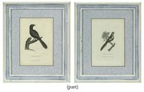A SET OF EIGHT ENGRAVINGS OF PARROTS FROM THE SYSTEMATIC NATURAL HISTORIES