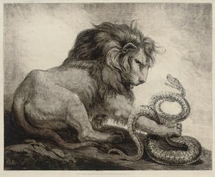 Lion & Snake