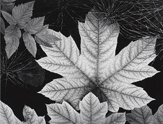 Leaves, Alaska, 1948
