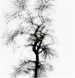 Multiple Exposure Tree, Chicag