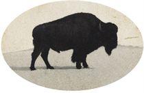 Jumbo, Died at Denver City Park, 1900