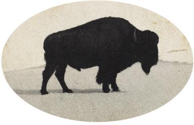 Jumbo, Died at Denver City Par