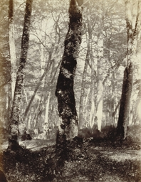 Figure, Forest, Fontainebleau,
