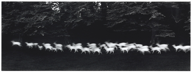 Running White Deer, Wicklow, I