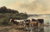 Cows on the embankment