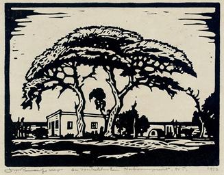 A farmstead with acacia trees