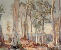 A group of white gums, summer afternoon, Hahndorf
