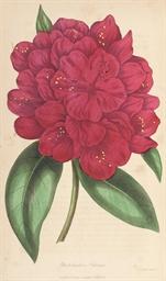 PAXTON, Joseph (1803-1865). Pa