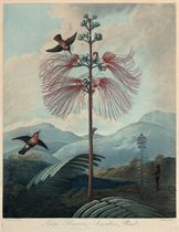 Large Flowering Sensitive Plant; The China Limodoron; and The Narrow-Leaved Kalmia, by Stadler, Landseer, and Caldwall