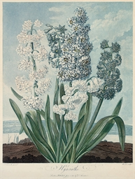 Hyacinths; and A Group of Carn