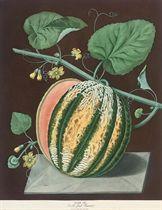 Scarlet flesh Romana; Nectarines; Easter Bergamot Pear, Tarlington Pear; Bourdine Peach; Nevet Peach; Late Admirable Peach; Plums; Cherries; Figs; and Black Hamburg, from 'Pomona Britannica'
